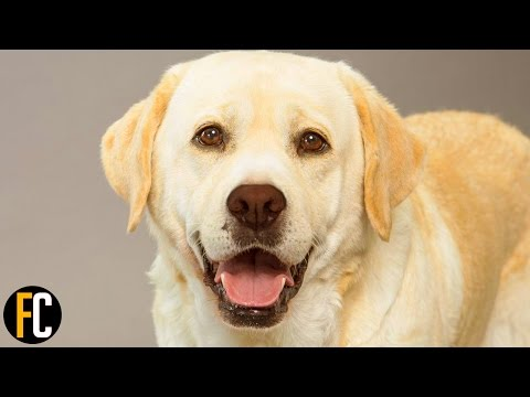 Top 10 Most Popular Dog Breeds in America 2017