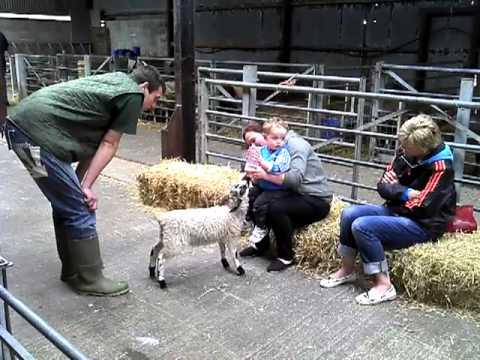 George feeding a lamb