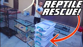massive-reptile-rescue-what-did-we-save