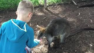 Zwierzeta Australii