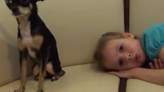 Подстричь когти собаке той терьер. Terrier
