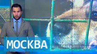"""Животных из московского приюта """"ЭКО-Вешняки"""" раздают всем желающим"""