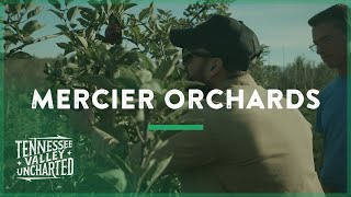 250 Acres of Apples in Mercier Orchards (Blue Ridge, GA) - Tennessee Valley Uncharted