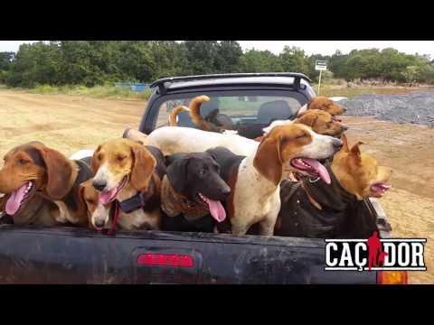 Caçada de Javali - Hunters and Cowboys
