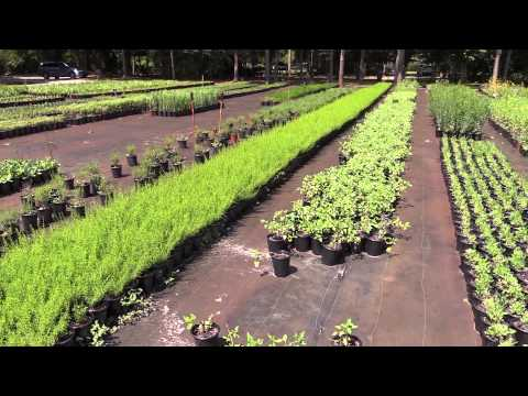 Green Isle Gardens, a Florida Native Plant Nursery