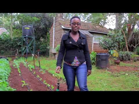 Low cost solar pumping system- The RainMaker   Kenya