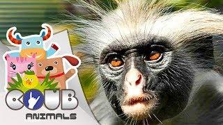 Смешные видео про животных #10 | COUB | Приколы с животными