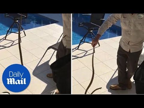 This Adelaide couple had a brown snake hiding in their garden hose reel – Daily Mail