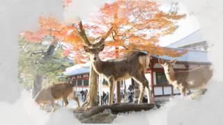 說明【東大寺】是日本奈良時代的佛教事業,在八世紀中由信奉佛教的聖武...