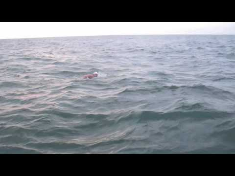 Andrew Vidler (AV) English Channel Swim 2011