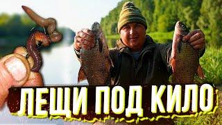 ЛЕЩИ ПОД КИЛО ГНУТ УДОЧКИ Рыбалка с Ночёвкой На Красивой Реке у Костра