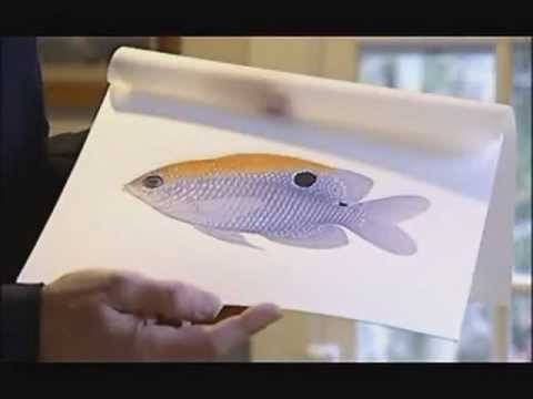 A Field Guide to Coastal Fishes - NBC29 March 22, 2011