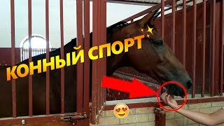 Конный спорт в Узбекистане | Vlog ep.4