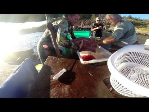 Spearfishing Norfolk Island