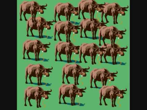 The Water Buffalo Song- Superchick