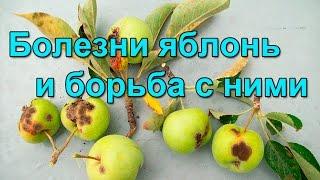 видео Вредители яблони и меры борьбы с ними
