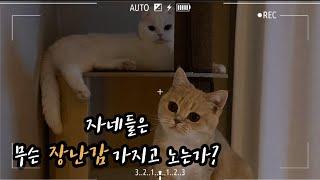 [빵떡일상13.] 고양이는 어떤 장난감을 가지고 놀까요…