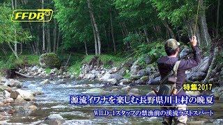 源流イワナを楽しむ長野県川上村の晩夏|フライフィッシング データバンク