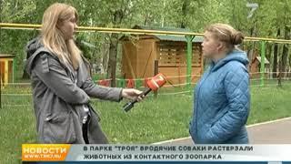Бродячие собаки растерзали всех животных из контактного зоопарка в Красноярске.