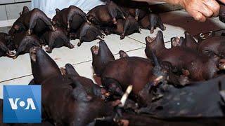 Bats For Sale At Indonesia Market Despite Coronavirus Warning