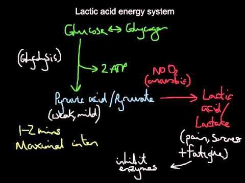 Lactic acid system