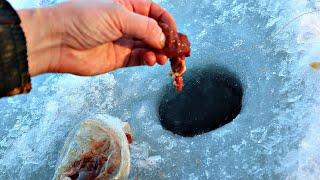 Насадите это на крючок На эту наживку ловится хищники и мирная рыба зимой и летом Наживка печень