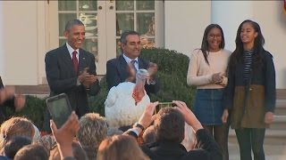 Free Birds: President Obama Pardons 'Honest' and 'Abe'