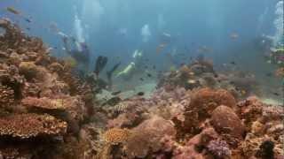 Southern Leyte - Savedra Dive Safari
