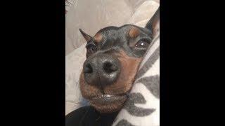 Питание щенка