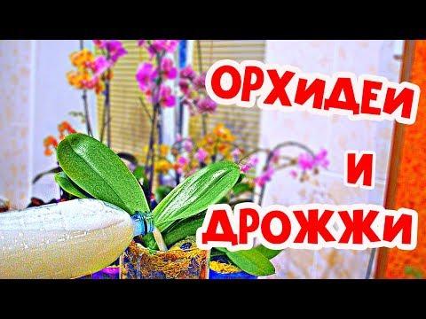 дрожжевая подкормка для растений, рецепт, приготовление дрожжевой подкормки для растений