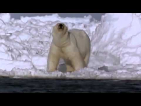 Global Warming and its Effect on Wildlife