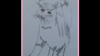 Рисую котенка пошагово (поэтапно)