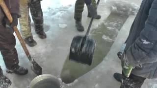 видео Гольян