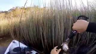 How to catch Big Aus Bass on soft plastics from Kyak