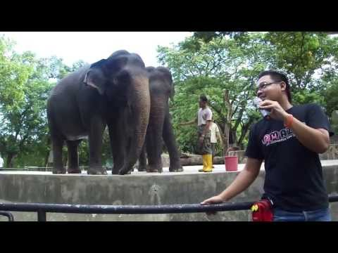 On-Site Guide / In-house guide at Zoo Negara, Malaysia
