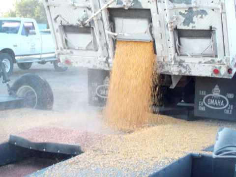 Corn Harvest in Nebraska