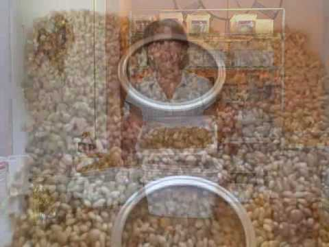 sprouting--part-3---drying-sprouted-wheat-for-flour