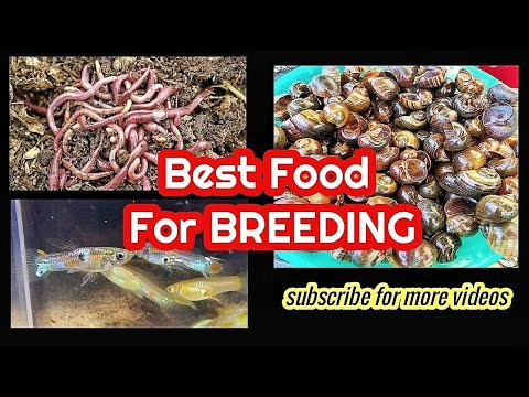 Best Food For Breeding Pairs , #Team_Toril