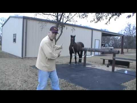 How Not To Get Kicked By A Horse - Why Horses Kick People - Stay Away From Back Hooves