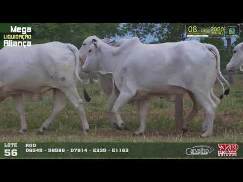 LOTE 056