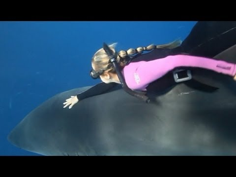Shark Whisperer: Woman Swims With Great Whites in Perfect Harmony