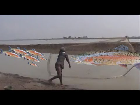Wow ! Smart Fisherman Catch A Lot Of Fish #  Awesome old man catching fish 2017