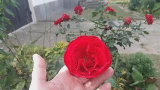 ОСМАТРИВАЮ СВОИ ВЛАДЕНИЯ /Видео № 1253