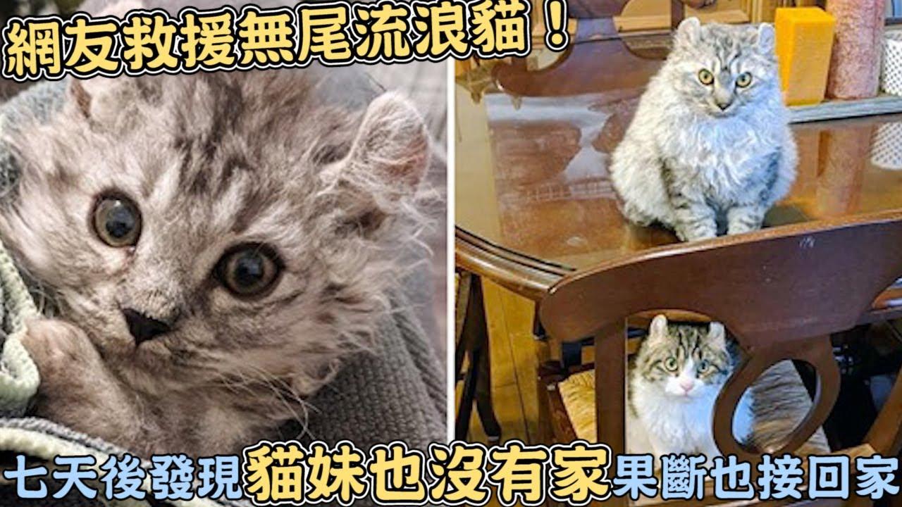 網友救援無尾流浪貓!七天後發現「貓妹也沒有家」果斷也接回家:兄妹終於團圓了