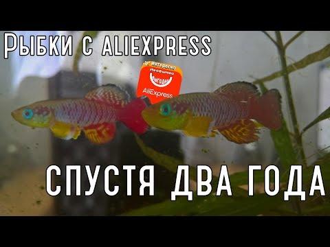 Живые рыбки с Aliexpress, два года спустя