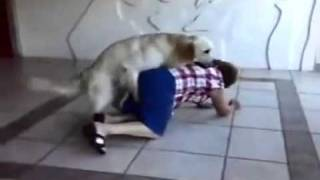 SEX cachorro porn  catador de via  perverted dog attacking defenseless woman.wmv