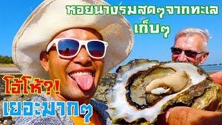 บุกป่าหอยนางรมโอ้โห้ใหญ่ยักษ์!!เก็บแกะกินสดๆมันเยอะฟินนเป็นดงมากๆเลือกไม่ถูกเลย