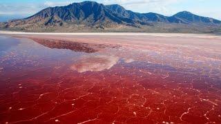 【衝撃】ファンタジー!?生きた動物が石化する地獄の湖【閲覧注意】