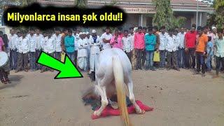 Bu At Sahibinin Cenazesine Geldi, Ancak Daha Sonra Olanlar Herkesi Şaşırttı