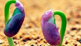 Половое размножение растений (2). Биология 6 класс.